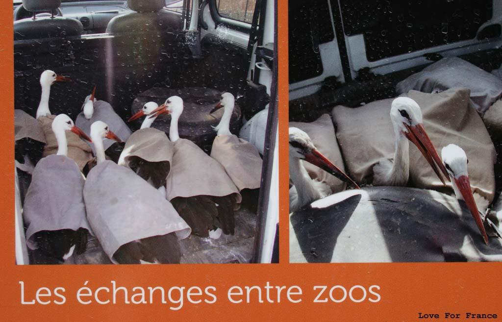 zoo w miluzie