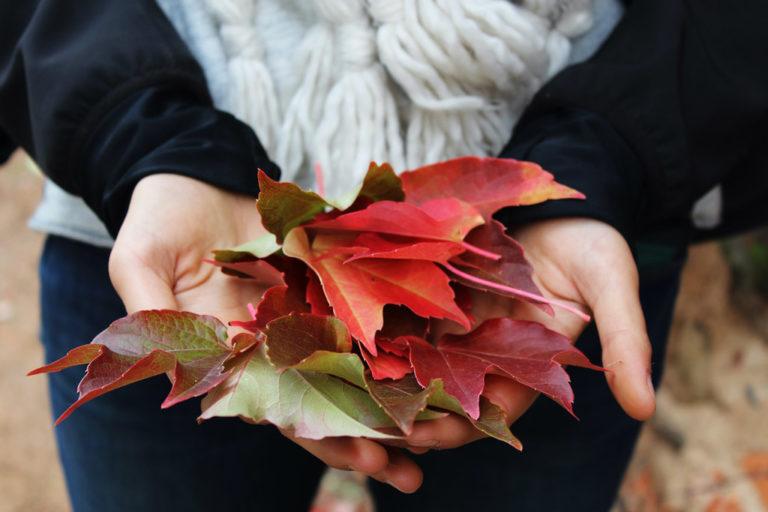 pomysły na jesień