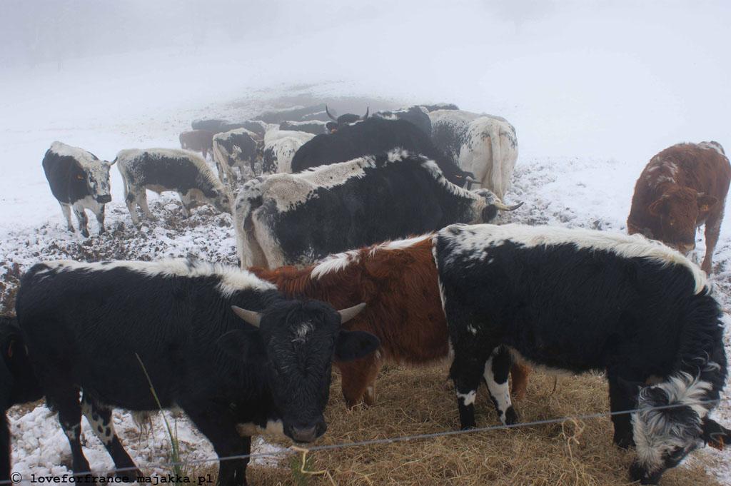 zima w Alzacji