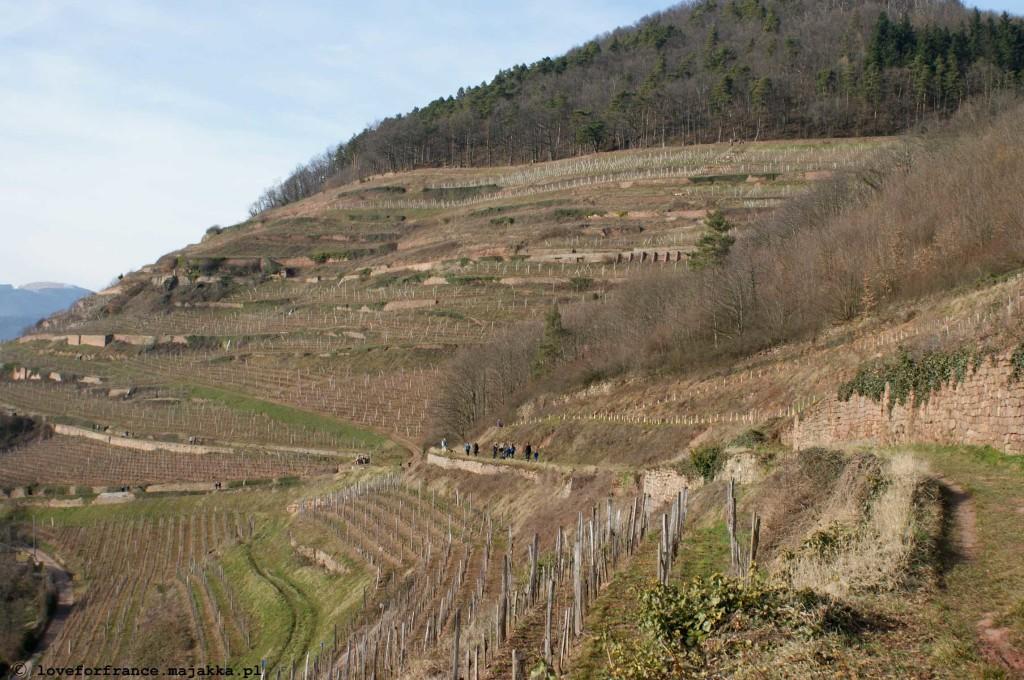 wiosna winnice Alzacja Guebwiller